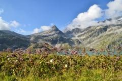 Nationaal Park Hohe Tauern - Bloemen en bergen omringen de Weissenzee