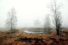 Heidelandschap