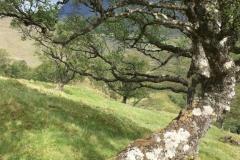 Scheef gegroeide bomen