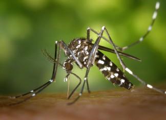 Hoe een muggenplaag voorspellen?