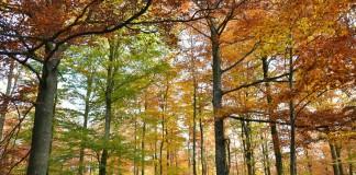 herfst-in-Tenneville - ftlb-p-willems