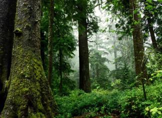 De mooiste bossen van Europa