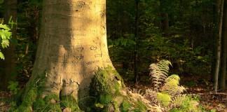 De staat van het Belgisch bos (c) Tom Linster, Meerdaalwoud