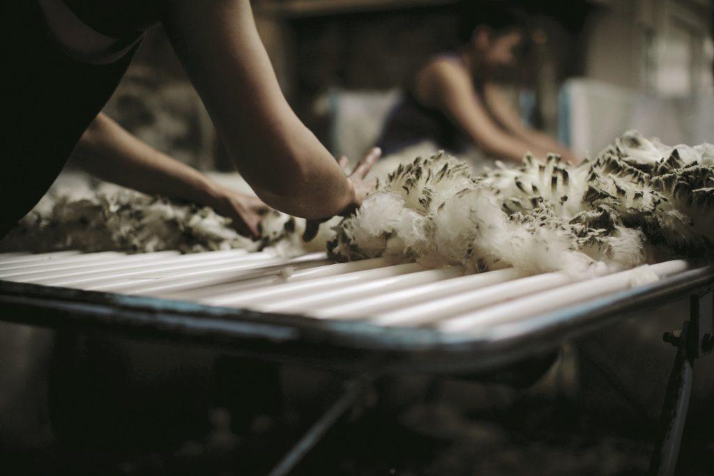 Icebreaker transparantierapport: het verhaal achter de wol