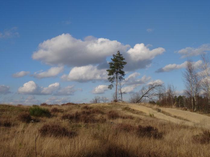 Wandelen in de Limburgse duinengordel van Oudsbergen