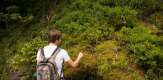 Foodwalking - wildplukwandelen in de natuur (c) pxhere.com