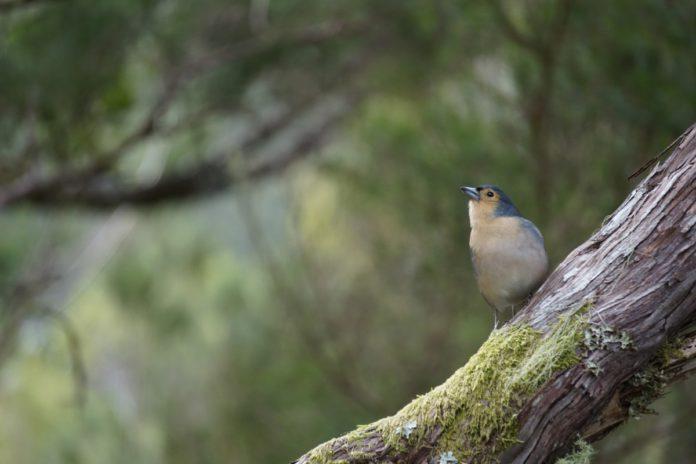 Onderzoek bospaden, mensen en vogels (c) pxhere.com, Piggeldi