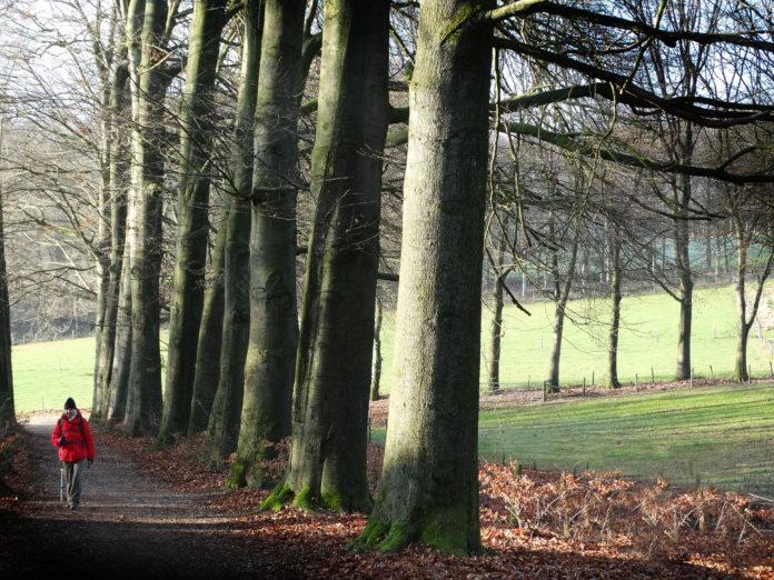 Wandelroute van het jaar: Romeinse Limespad in Nederland
