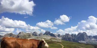 Actie en avontuur in de Alpen met jongerenreisorganisatie KrisKras