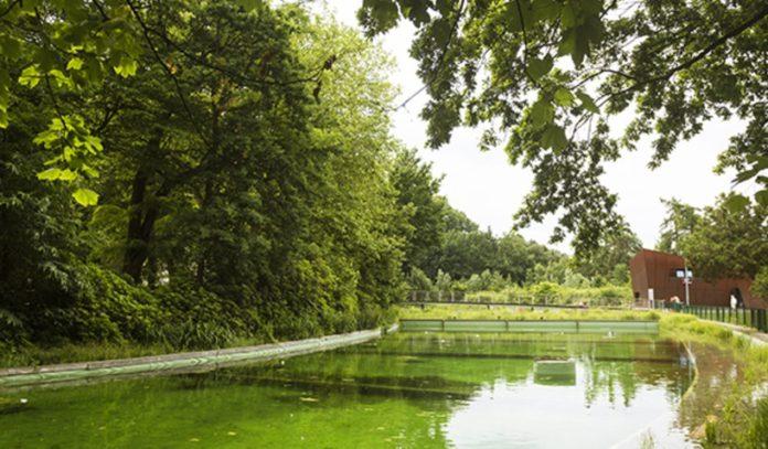 wildzwemmen - zwemmen in de natuur