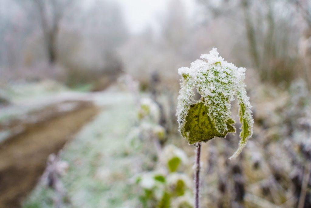 Winterwandelingen in Antwerpen