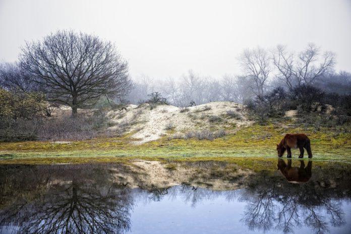 Wandelingen aan de Belgische kust in de winter