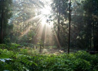 Wandelen in de bossen rond Brussel - Zonienwoud