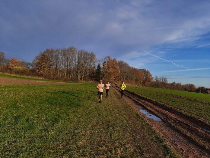 Verslag Team Far Out loopt Meerdaalwoud Trail in Bierbeek