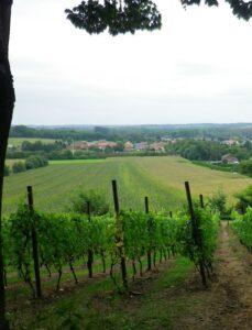 Wijngaarden op de wijngaardberg (c) Wikimedia, Anse Kinnaer