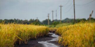 landschap weg met gras